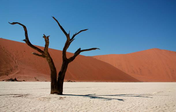 year old skeleton of a tree in Deadvlei Namibia Its so dry the trees dont decay