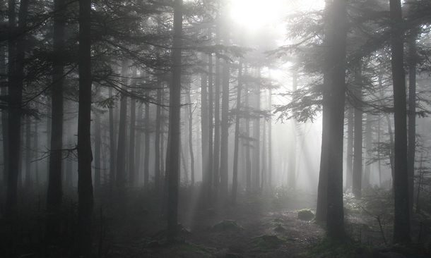 A foggy morning during our hike of The Long Trail in Vermont