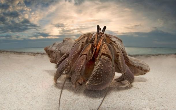 A Hermit Crab On Beach In Mozambique By Dale Morris