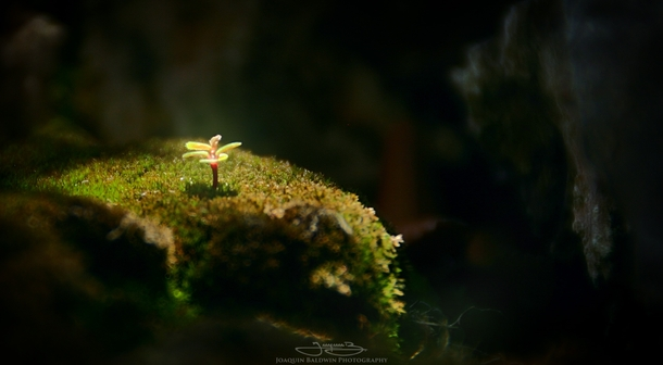 A minuscule plant sprouting INSIDE a bonsai tree Wider view in comments