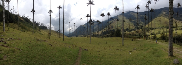 A short walk outside of Salento Colombia this is not a jungle and it does not take  hours to get here
