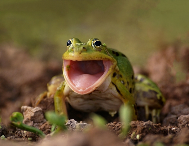 A Smiling Frog X-post from rPics - Photorator