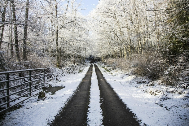 A snow-covered driveway on Whidbey Island WA