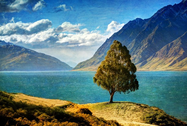 A tree on a quiet sunny day at Lake Hawea New Zealand