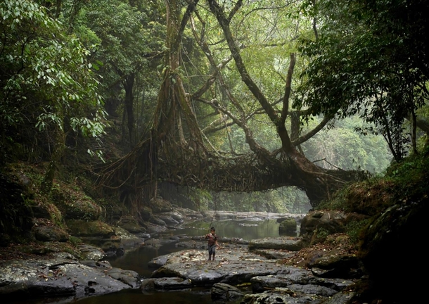 A young fisherman walks under the ancient tree root bridge at Mawlynnong village