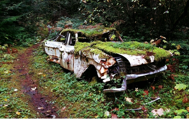 Abandoned Car Found In Woods On Vancouver Island Bc Photorator