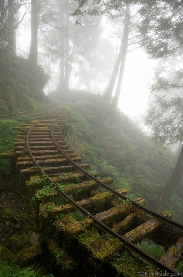 Abandoned railroad in a forest in Taiwan  x-post of a repost from rpics