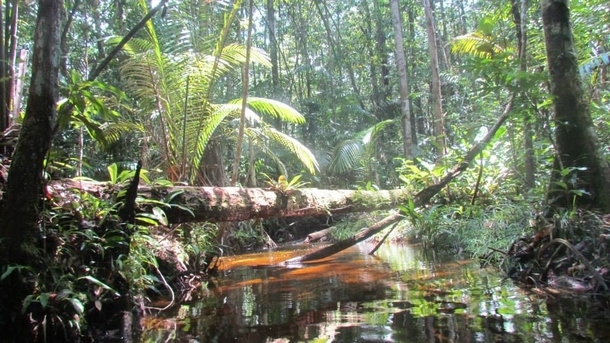 Five steps to save the Amazon - The Ecologist