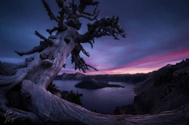 An ancient tree on the rim of Oregons Crater Lake at twilight