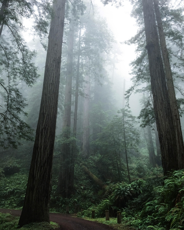 An eerie look inside Redwoods National Park