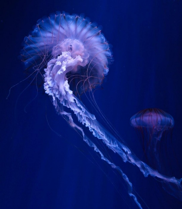 An Electric Jellyfish