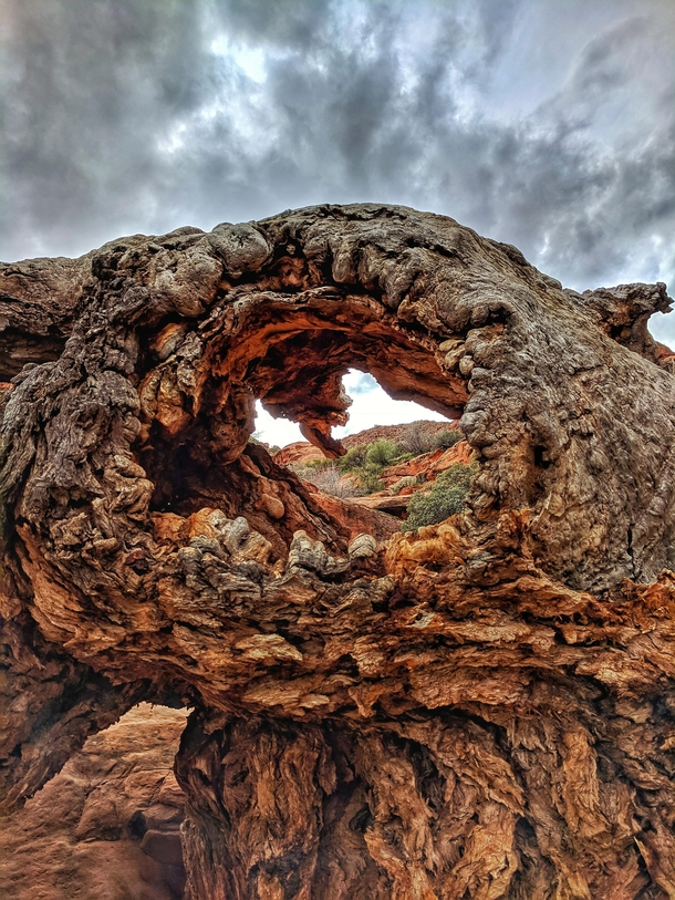 Another one from Red Reef trail in Utah Dead tree with a window  hopefully this pleases the saturation gods Tried to go less than the last picture