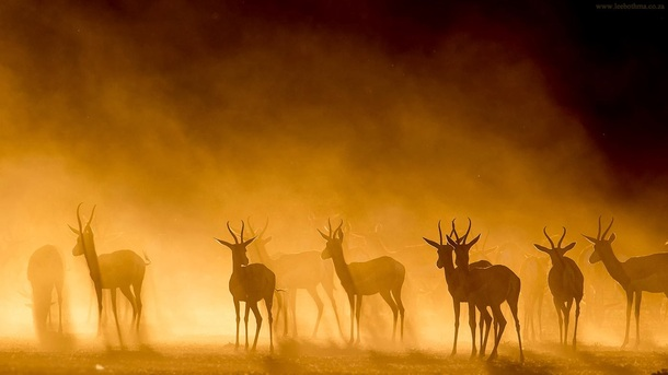 Antelopes in the morning mist by Lee Bothma
