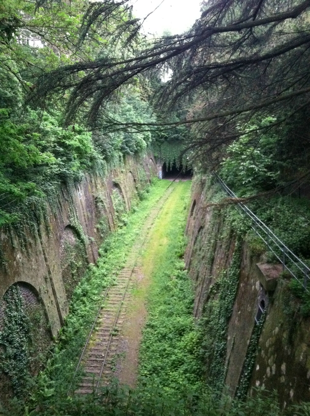 Beautiful old metro rail reclaimed by nature