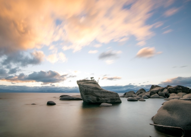 Bonsai Rock karlzoltan