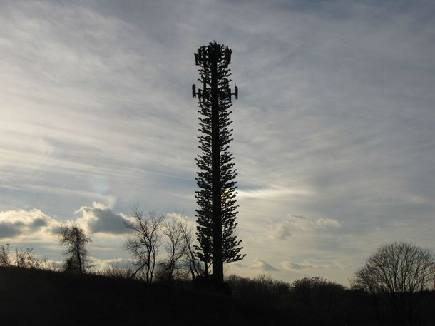 Cell phone tower in Silver Spring Maryland next to the Intercounty Connector disguised to look like a tree