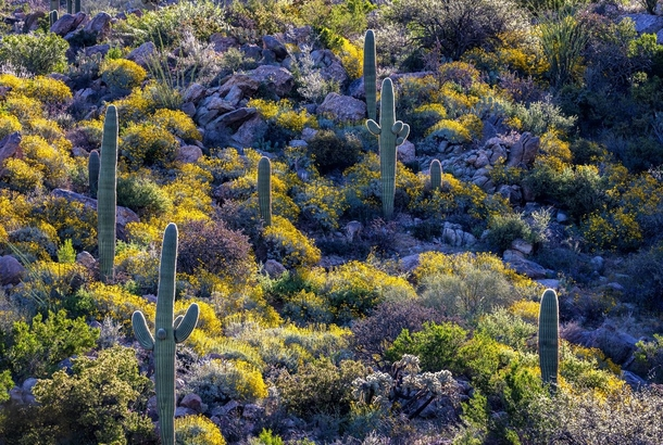 Desert Hillside Full of Color wBonus Wildlife Tucson AZ USA