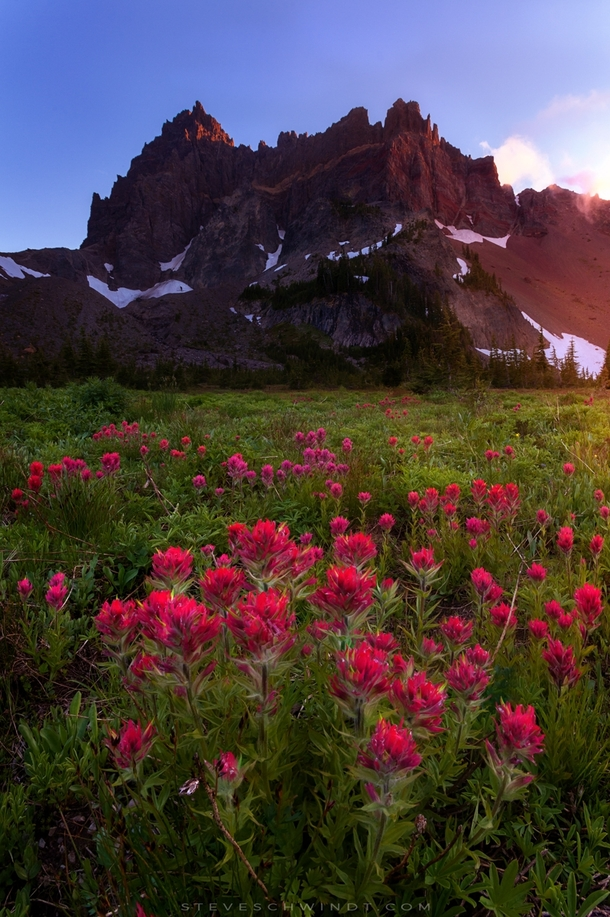 Early blooms of indian paintbrush flowers begin to blanket the meadow below Three Fingered Jack in the Mt Jefferson wilderness OR