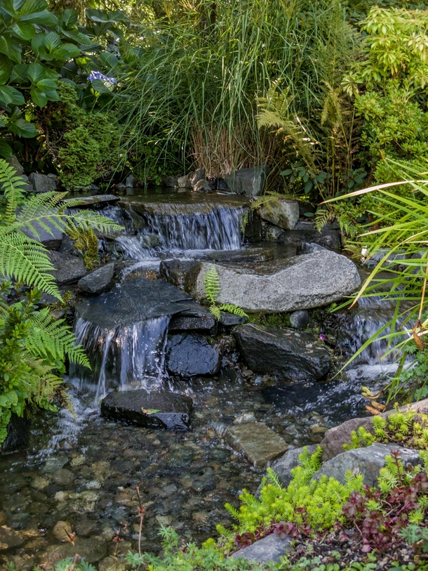 Even small streams can be interesting and refreshing Photo taken at Highline Seatac Botanical Gardens in Seatac Washington