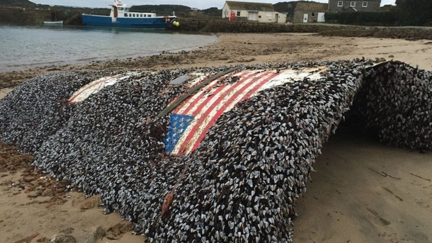 Falcon  rocket is found in the UK shores