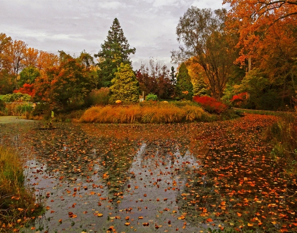 Fall in Maryland isnt too bad either My phone doesnt do it justice Brookside Gardens MD