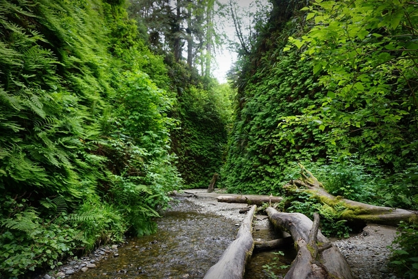 Fern Canyon CA - Film location in The Lost World Jurassic