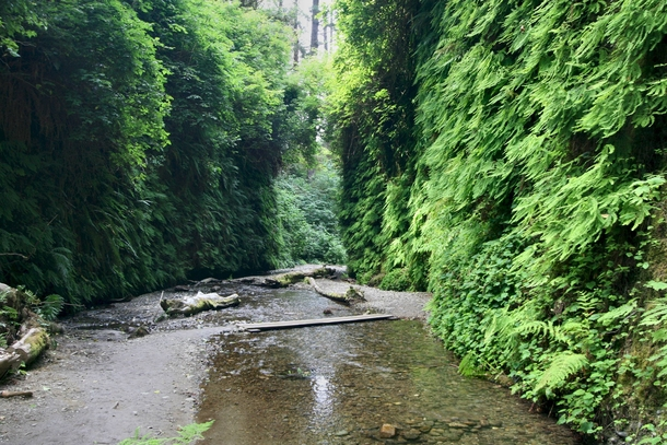 Fern Canyon or Jurassic Park  I use to do my long runs here in college Great place to run