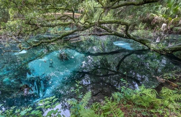 fern hammock springs in central florida plus bonus alligator fern hammock springs in central florida plus bonus alligator      rh   photorator