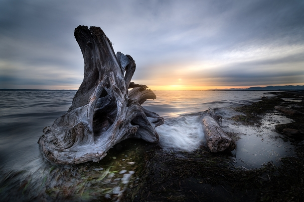 Finding good wood is basically the goal of my photographic life Crescent Beach BC