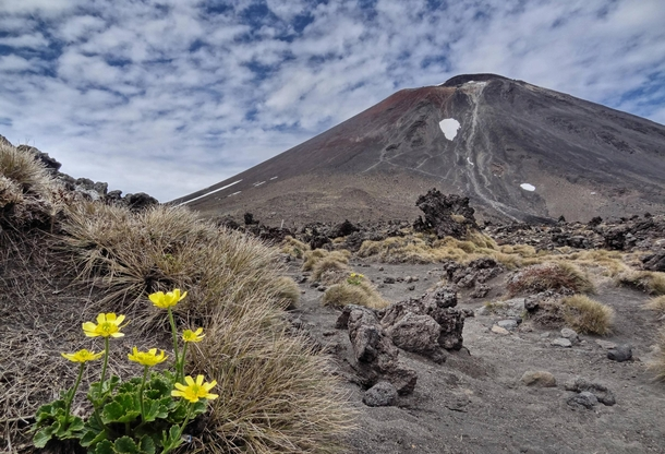 Flowers at the base of volcanic Mount Ngauruhoe New Zealand AKA Mount Doom from Lord of the Rings