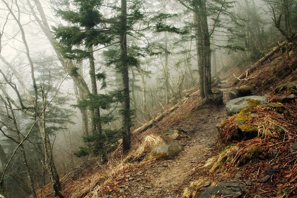 Fog covers the Appalachian trail on a dreary day - inside of the Great Smoky Mountains Tennessee