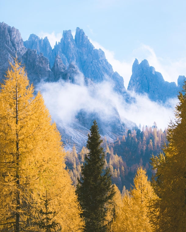 Forests of gold in the Italian Dolomites