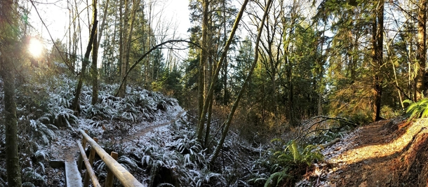 Frosty forest on Cougar Mountain WA