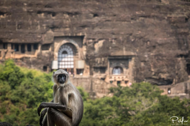 Got greeted by a monkey when exiting one of the temples at Ajanta Caves India