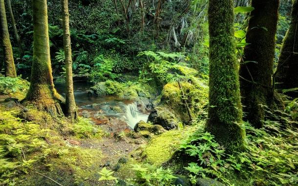 Rainforest On The Big Island: Hidden Forest On The Big Island Of Hawaii