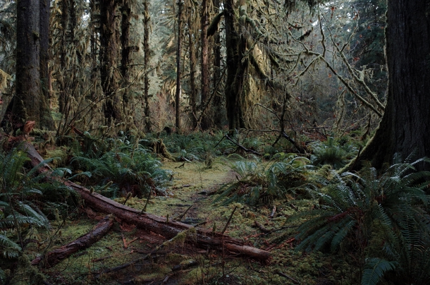 Hoh Rainforest Washington