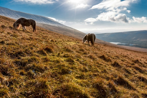 Horses grazing on the mountainside of Pen-Y-Fan Wales  Redirect from rEarthPorn
