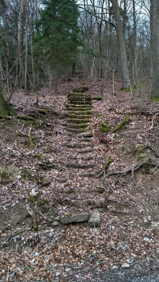 I found a long forgotten set of stairs in the forest