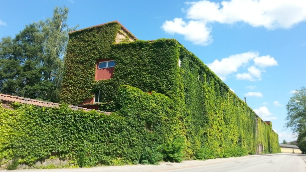 I passes this huge abandoned warehouse in Sweden its completely covered in vines on all sides
