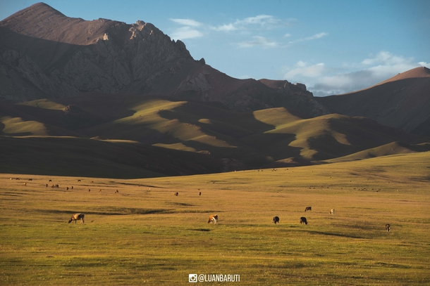 I spent the afternoon watching cows graze and listening to donkeys moan Song-Kul Kyrgyzstan