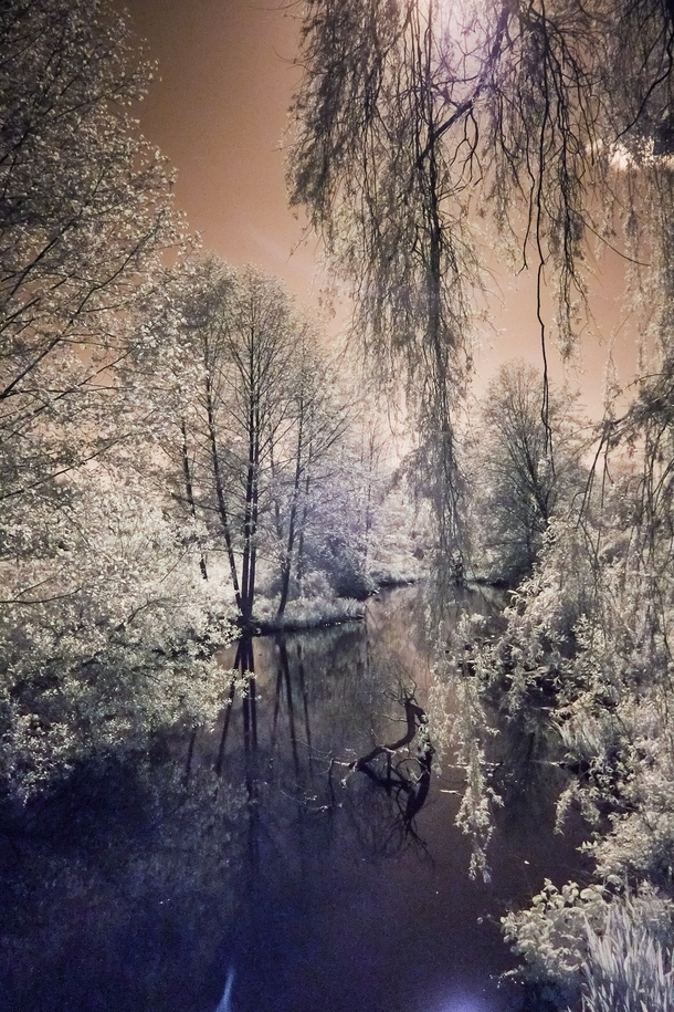 Infrared Willow trees by pond in Stanley Park Vancouver