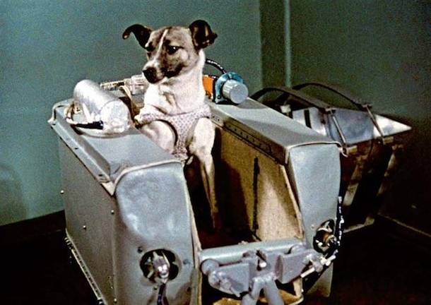 Laika a mixed-breed dog was the first living being in orbit She was launched on the Soviet Unions Sputnik  mission in November