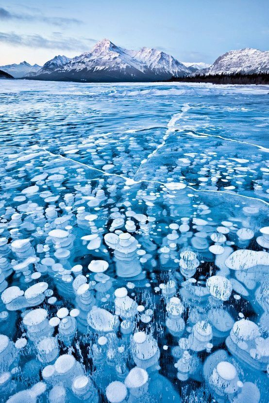 Lake Abraham Alberta These bubbles are a rare phenomenon where gas released from the lake bed is trapped in the frozen waters