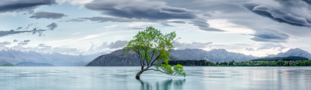 Lake Wanaka lonely willow tree New Zealand Photo Timothy Poulton