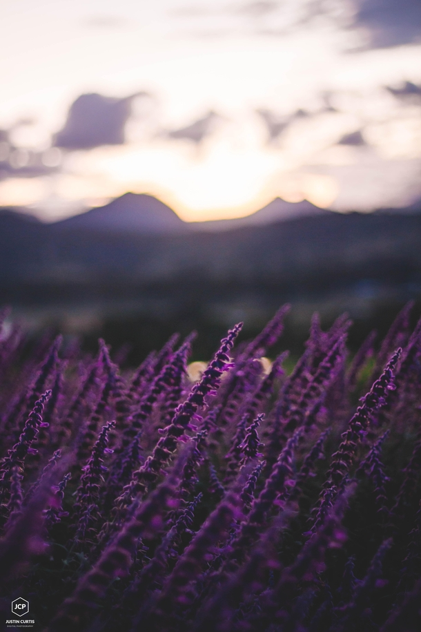 Lavender Sunset Scenic Rim Queensland