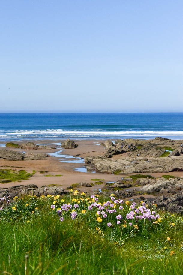 Low tide and gorgeous wildflowers growing on the beach heads in Bude Cornwall