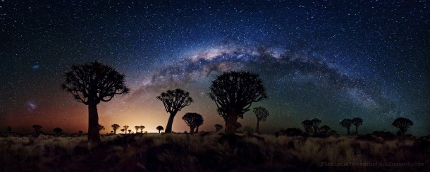 Milky Way Over Quiver Tree Forest Southern Namibia