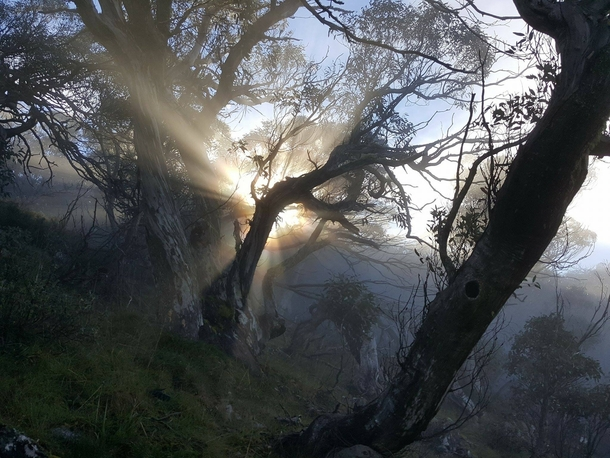 Morning sun peaking over Mt Buggery wilderness Victoria Australia