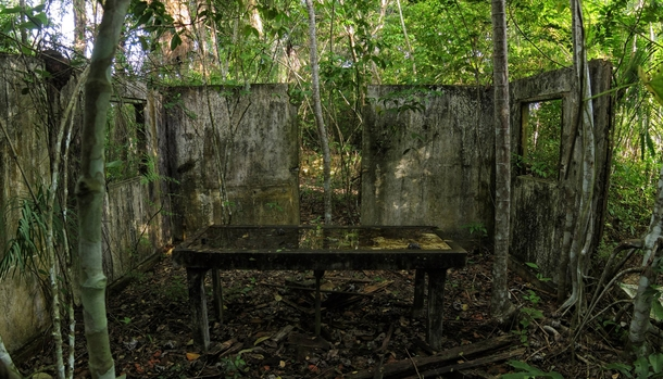 Mortuary operating table being reclaimed by the jungle in Brazil Photo by uedme