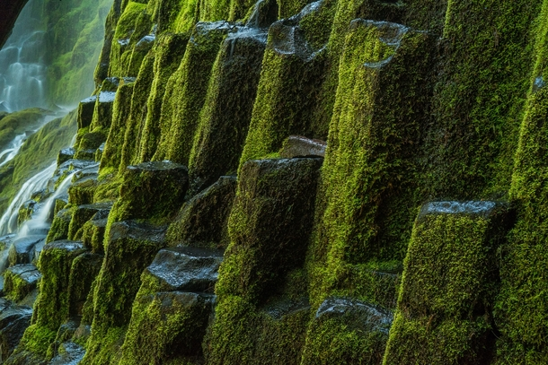 Moss covered basalt columns at the base of Proxy Falls in Oregon